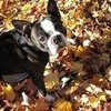 Dogs and Cats in Fall Leaves | Pictures