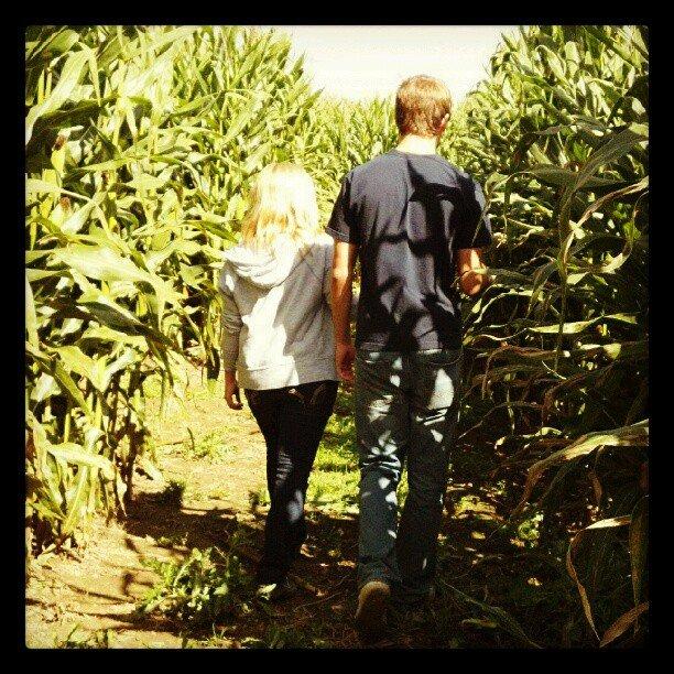 Wander a Corn Maze