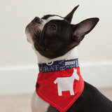 Democrat Dog Bandanna ($9)