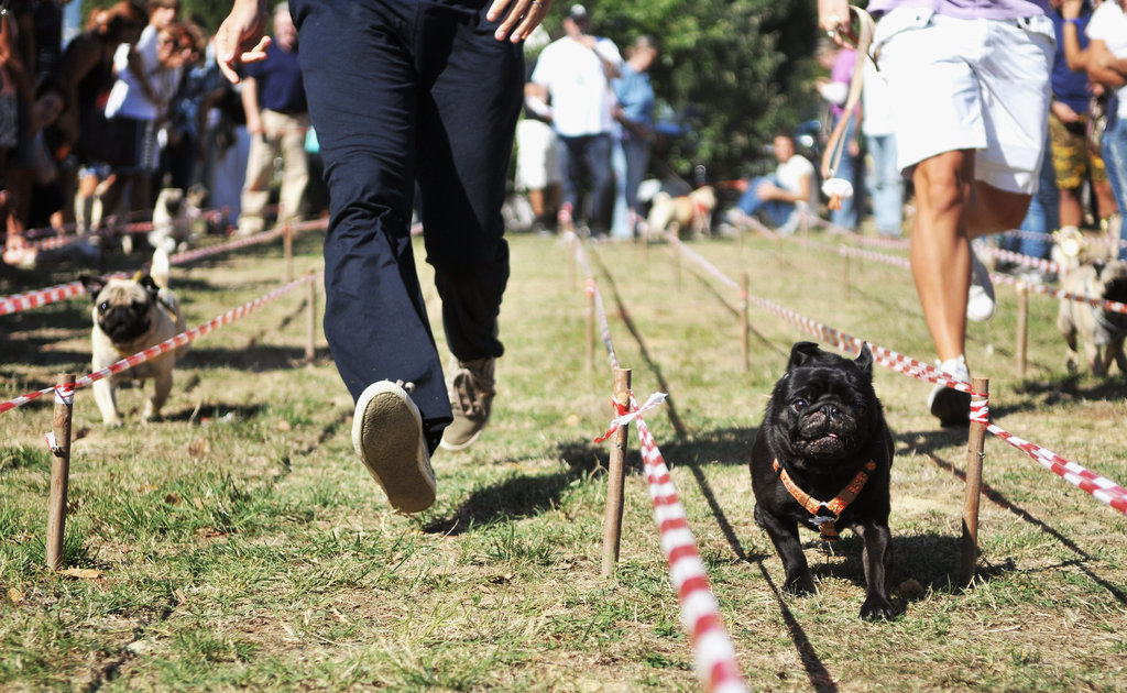 Human companions had a tough time keeping up with their competitors in the 100-meter dash.