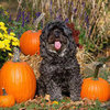 Best Pet Products and Pet Halloween Costumes