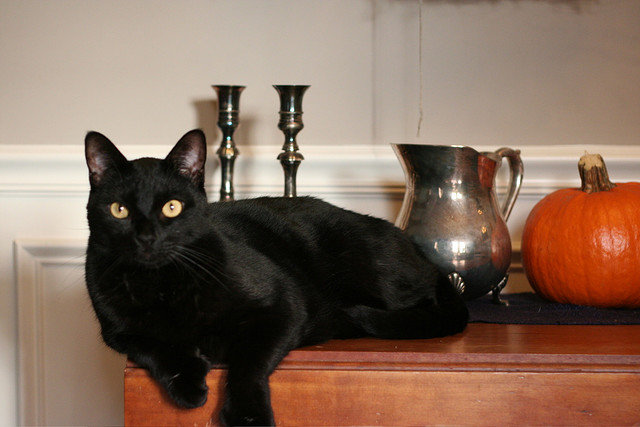 Cats, like pumpkins, make for terrific still-life subjects. Source: Flickr user Stephen Howard