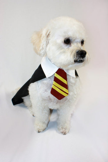 Harry Pawter
