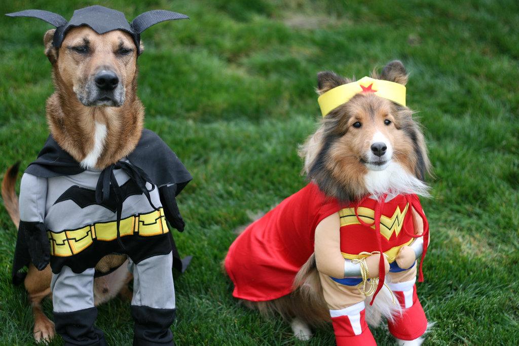 Superdog to the Rescue!