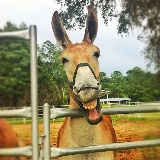 We're All Ears For National Mule Day!