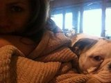 Brooklyn Decker chilled out with her bulldog. Source: Twitter user BrooklynDecker