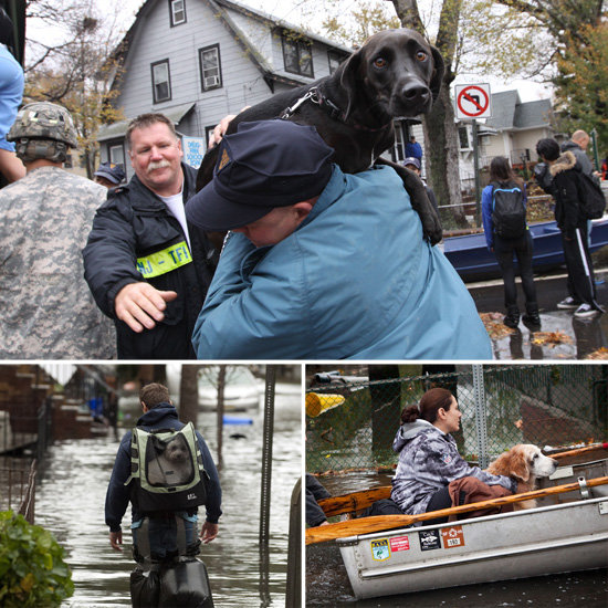 The Brave Dogs of Hurricane Sandy