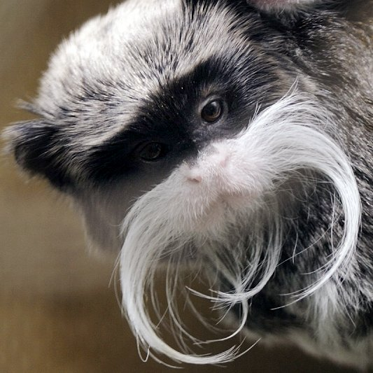 Whiskered Wildlife: 7 Animals Sporting Handsome Mustaches