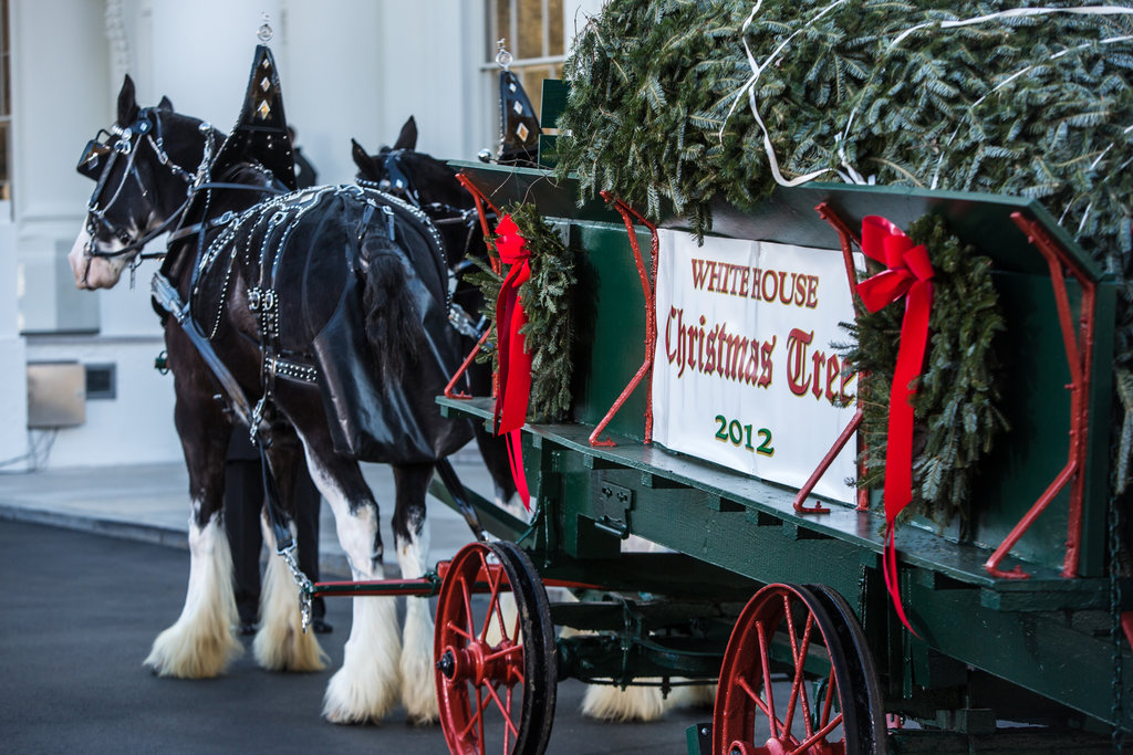 White House Christmas Tree Arrival