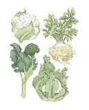 Winter Vegetables Print