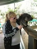 Rebel Wilson hung out with a koala during its lunchtime. Source: Twitter user RebelWilson