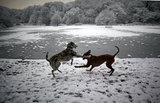 These two dogs playing next to Queen's Mere pond in London made a picturesque scene even more beautiful.