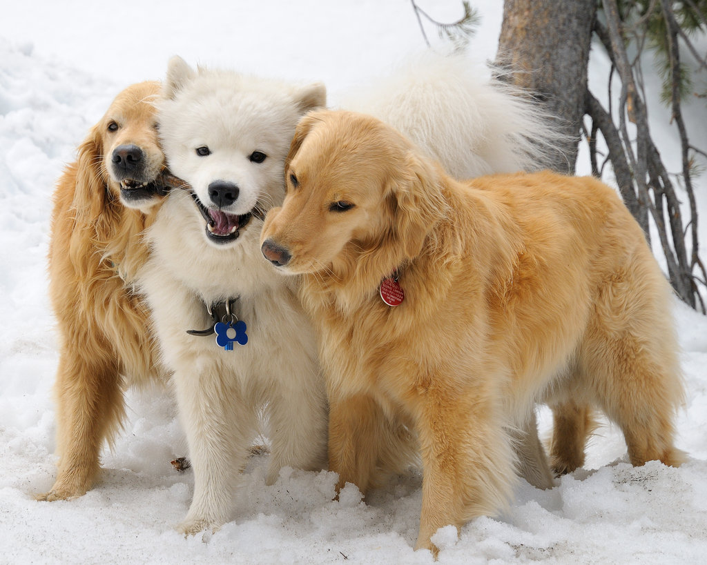 Could there be anything more cuddly than three long-haired dogs huddled together in the snow?