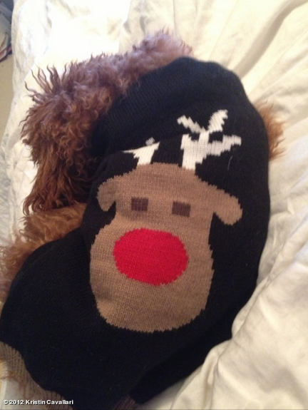 Kristin Cavallari showed off her dog Brando's festive holiday sweater. Source: Kristin Cavallari on WhoSay