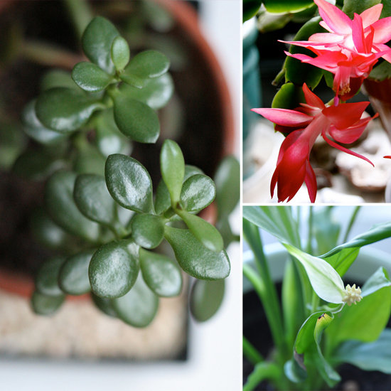 5 Beautiful, Foolproof Houseplants