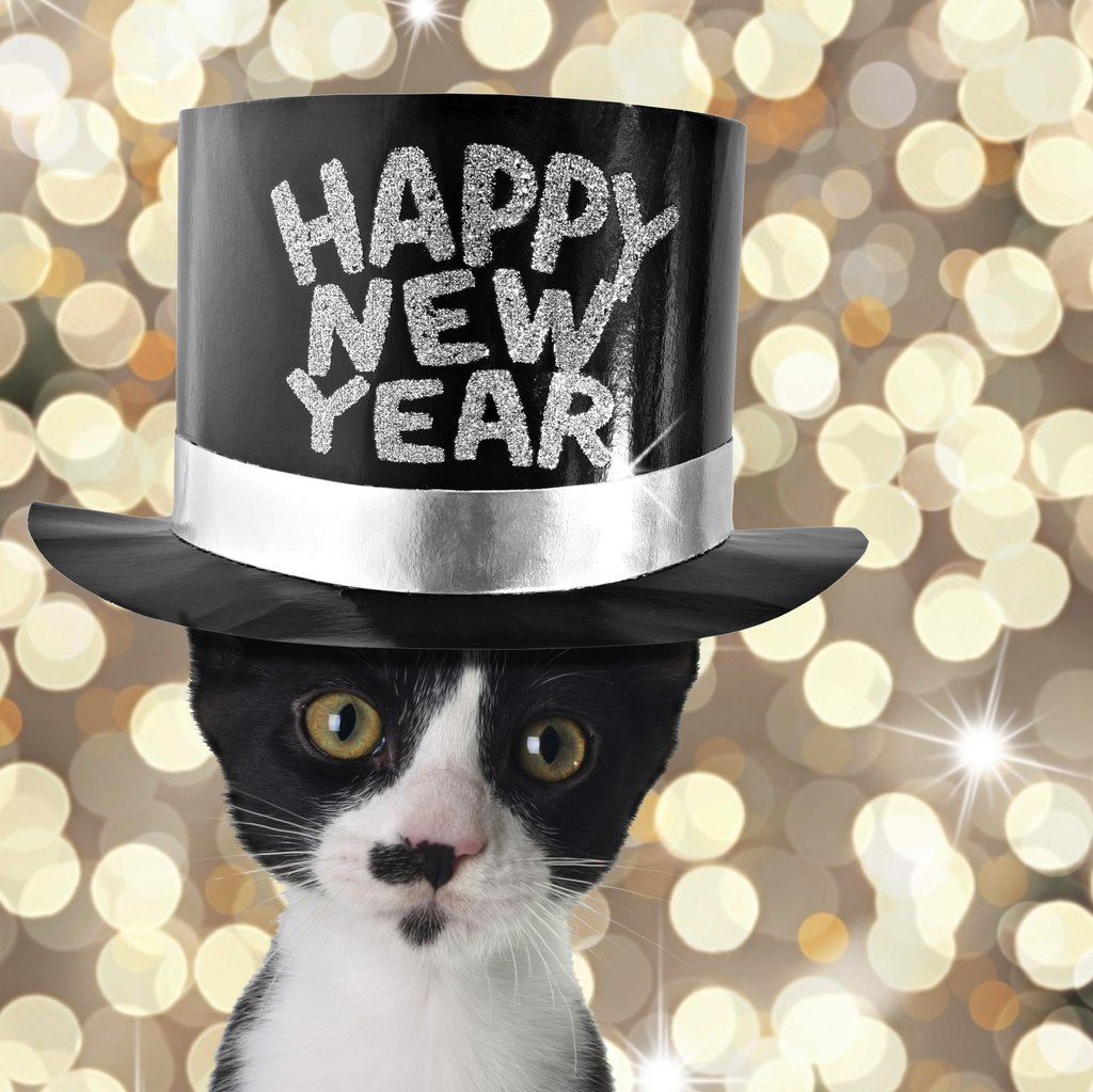 New Year's Resolutions For Pet Owners