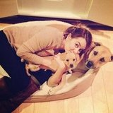 Lauren Conrad snuggled up with her pups.  Source: Instagram user laurenconrad