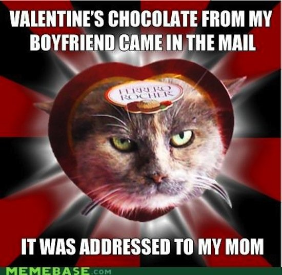 Apparently chocolates aren't for everyone, and this cat takes that to a literal level.  Source: Cheezburger
