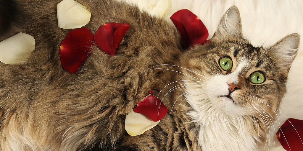 Celebrate Valentine's Day With the Pet Love of Your Life