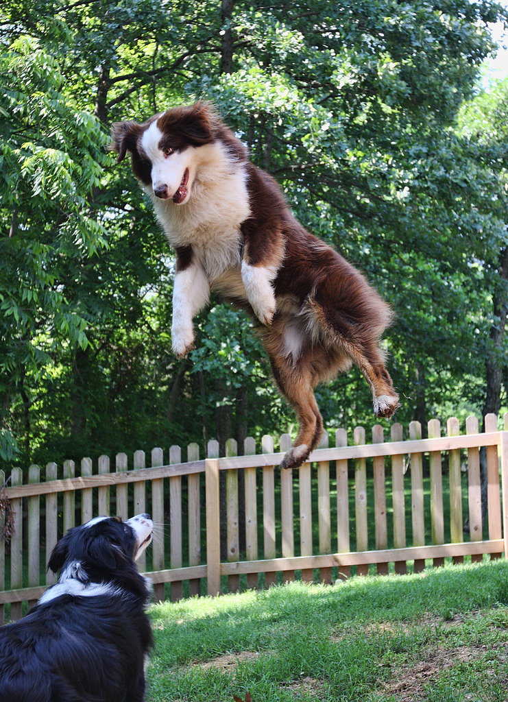 See? I Told You I Can Jump Higher!