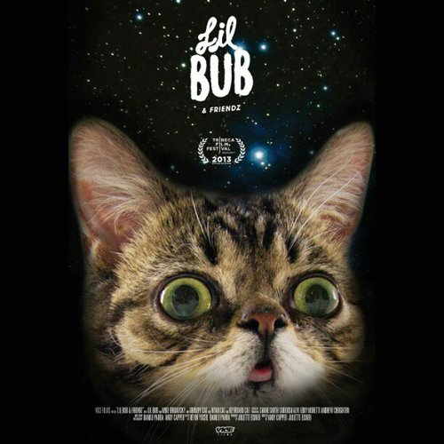 Lil Bub Hits the Tribeca Film Festival