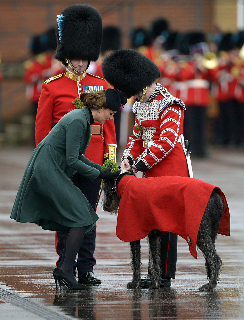 Kate Middleton pinned shamrock on a dog.