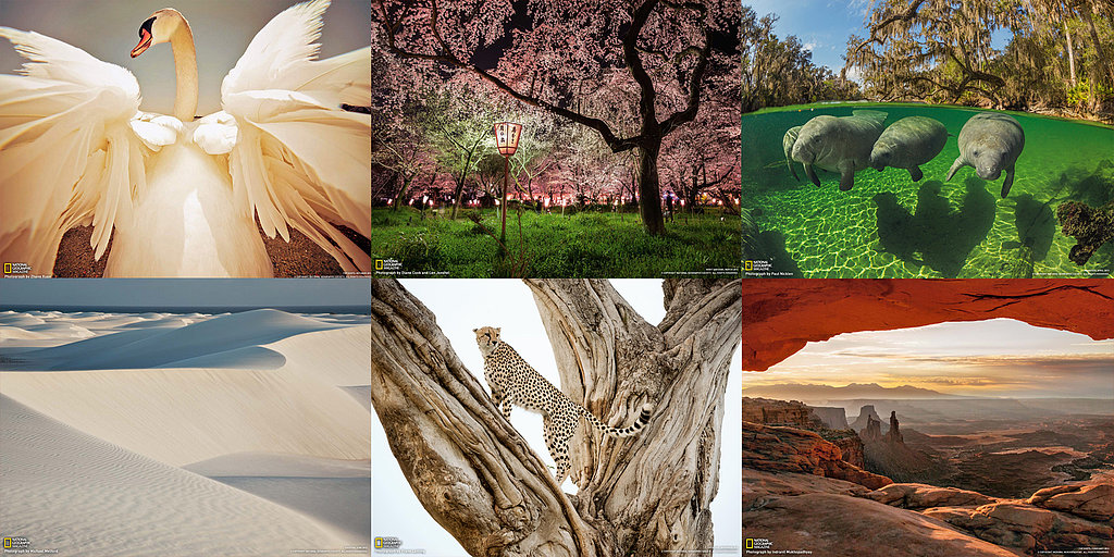 16 Free National Geographic Desktop Wallpapers to Relieve Work Stress