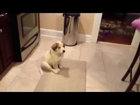 Teaching a Puppy How to Catch