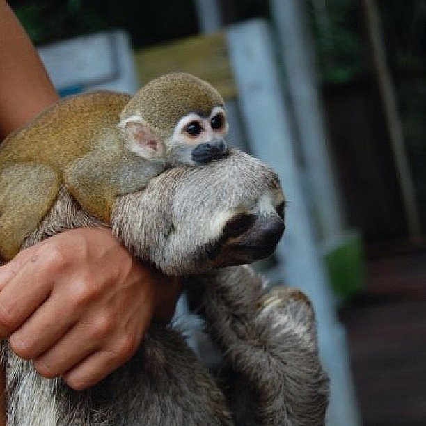 Judging by all the pictures of interspecies friendships out there, monkeys are undoubtedly one of the friendliest animals in the kingdom. Source: Flickr user tdevane
