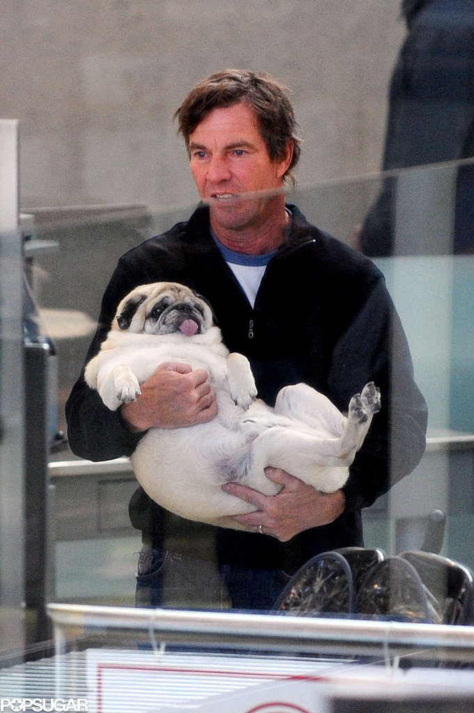 Dennis Quaid held on tight to his Pug, Pudgy, at the airport in LA in December 2008.