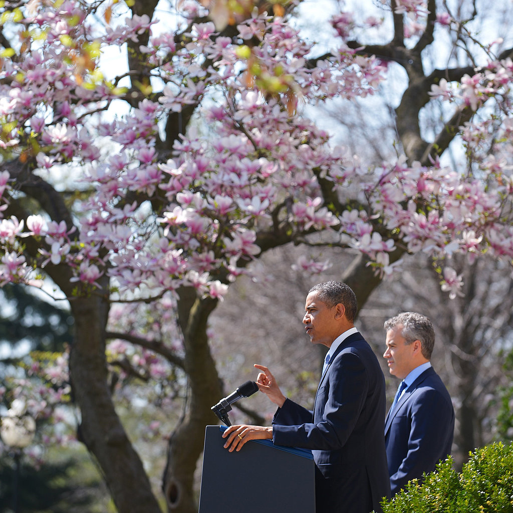 Barack in Blooms