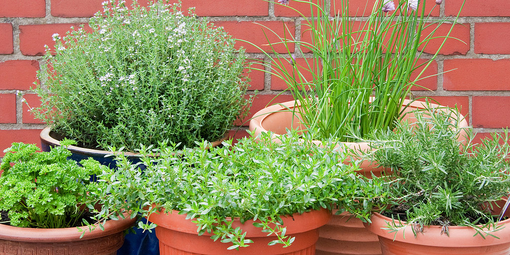 How to Plant a Thriving Herb Garden