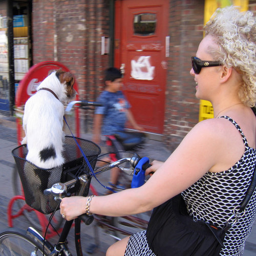 Bicycle Riding With Dogs