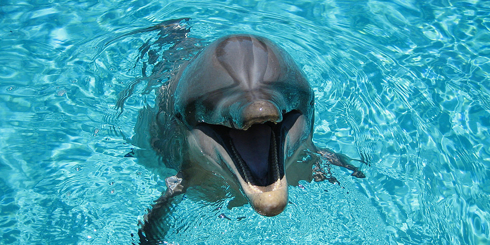 Would You Let a Dolphin Be Your Midwife?