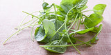 7 Everyday Ways to Use Watercress