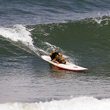 Dogs Surfing and Skating