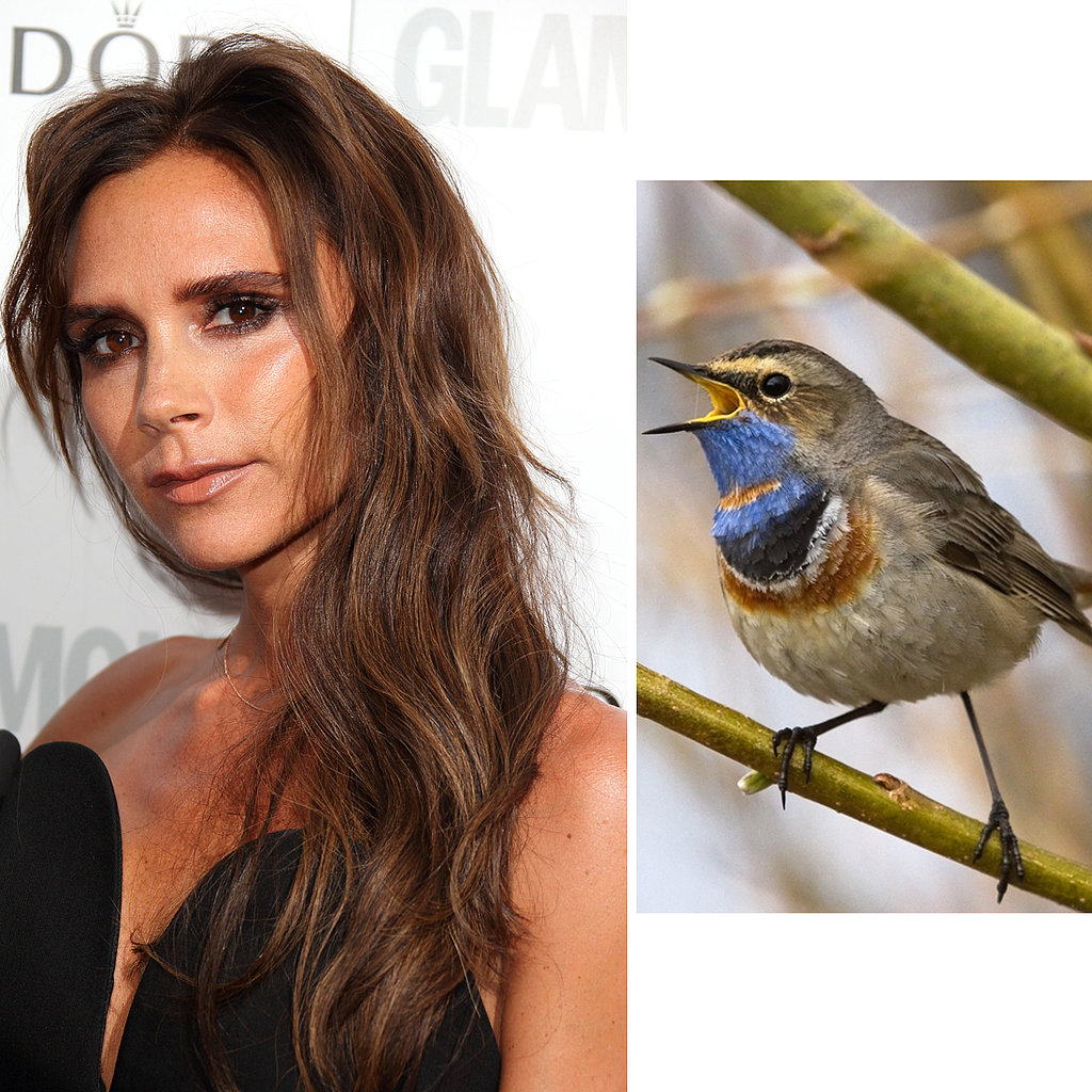 Victoria Beckham Gets Bird Poo Facials