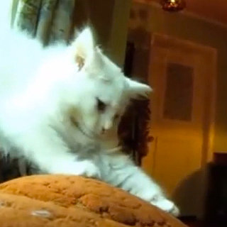 Pet Video: What Cats Do During the Day
