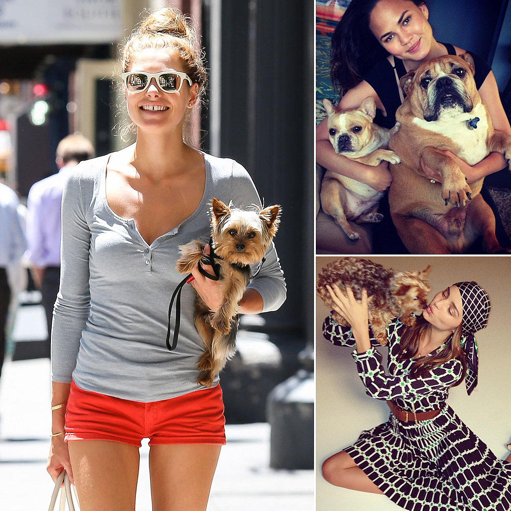 Model Dog Owners: See Stunning Stars and Their Cute Canines!