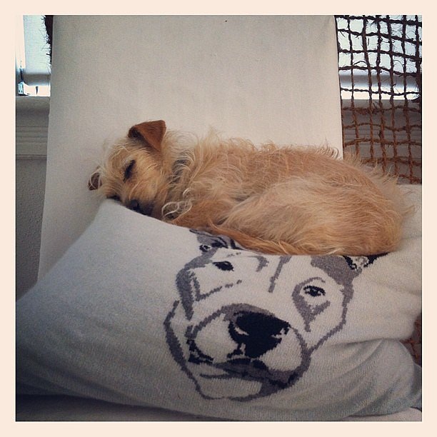Brad Goreski's companion got cozy on a familiar face. Source: Instagram user mrbradgoreski