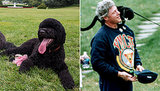 Sunny Obama, Barney Bush, Socks Clinton — And 8 More Memorable White House Pets!