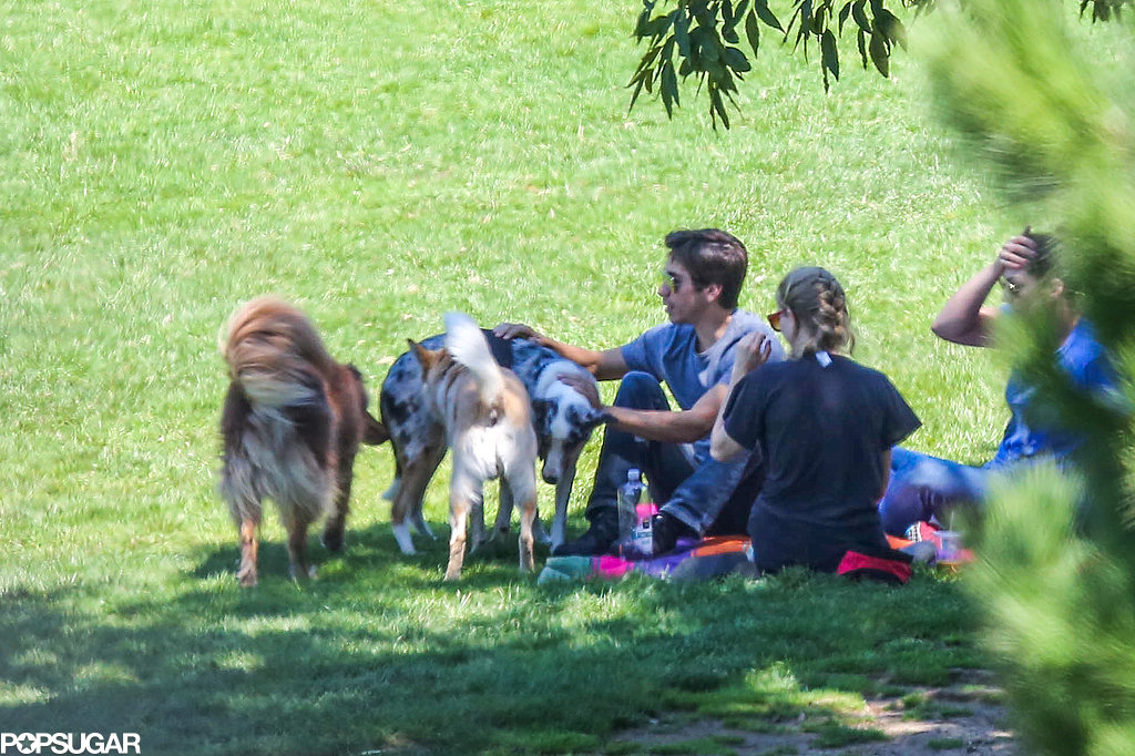 Justin Long played with a group of dogs at the park.