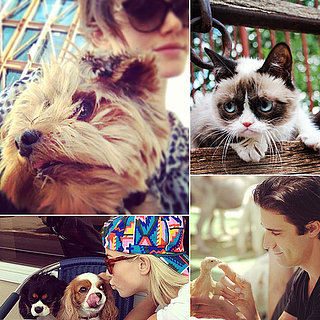 Celebrities Snuggling With Pets
