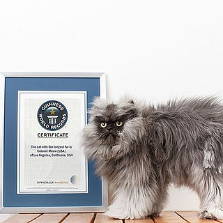 Colonel Meow Has Longest Fur