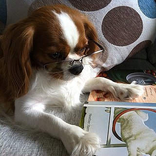 Pictures of Dogs Reading