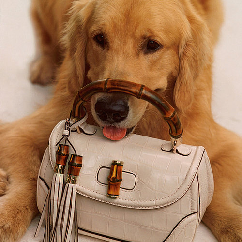 Golden Retrievers in Gucci Ads With Charlotte Casiraghi