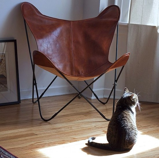 A leather butterfly chair is a far cry from the canvas ones found in many a dorm room. This cat agrees! Source: Instagram user la_maude