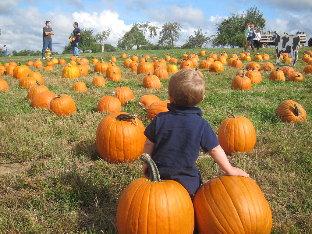 Go Pumpkin Picking