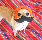 Detective Mustache