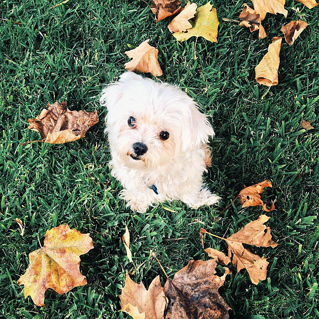 I love Fall leaves! Source: Instagram user ashleighann22